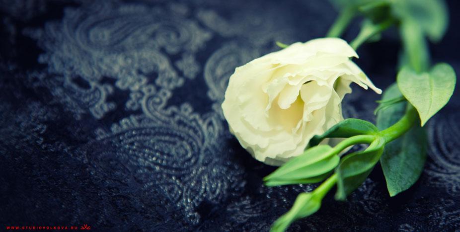 Свадьба Антона и Анны14_030312